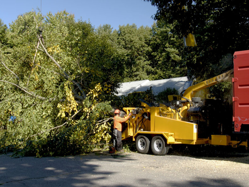 tree trimming services lipan tx,