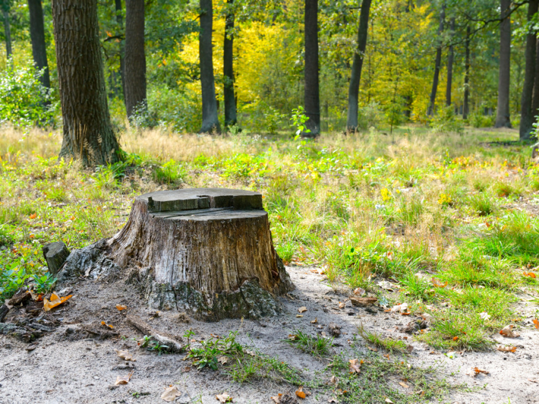 Get Rid of That Old Stump Once and for All